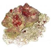 Gyvi akmenys