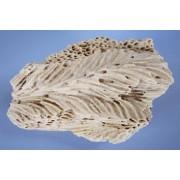 Natūralūs akmenys Brassa, 1 vnt (M dydis)