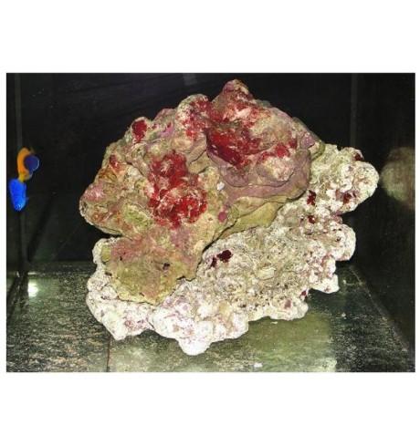 Gyvas jūros akmuo, 1 kg