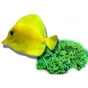 Žuvys, koralai, maistas