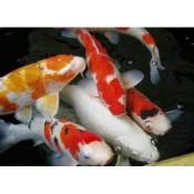 Tvenkinių žuvys