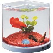 Akvariumas gaideliui su LED apšvietimu (su baterijomis)