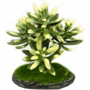 Dirbtinis augalas, 15cm